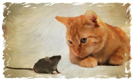 d2839f6c0631 Γάτα και ποντικός - Φεγγαρόσκονη